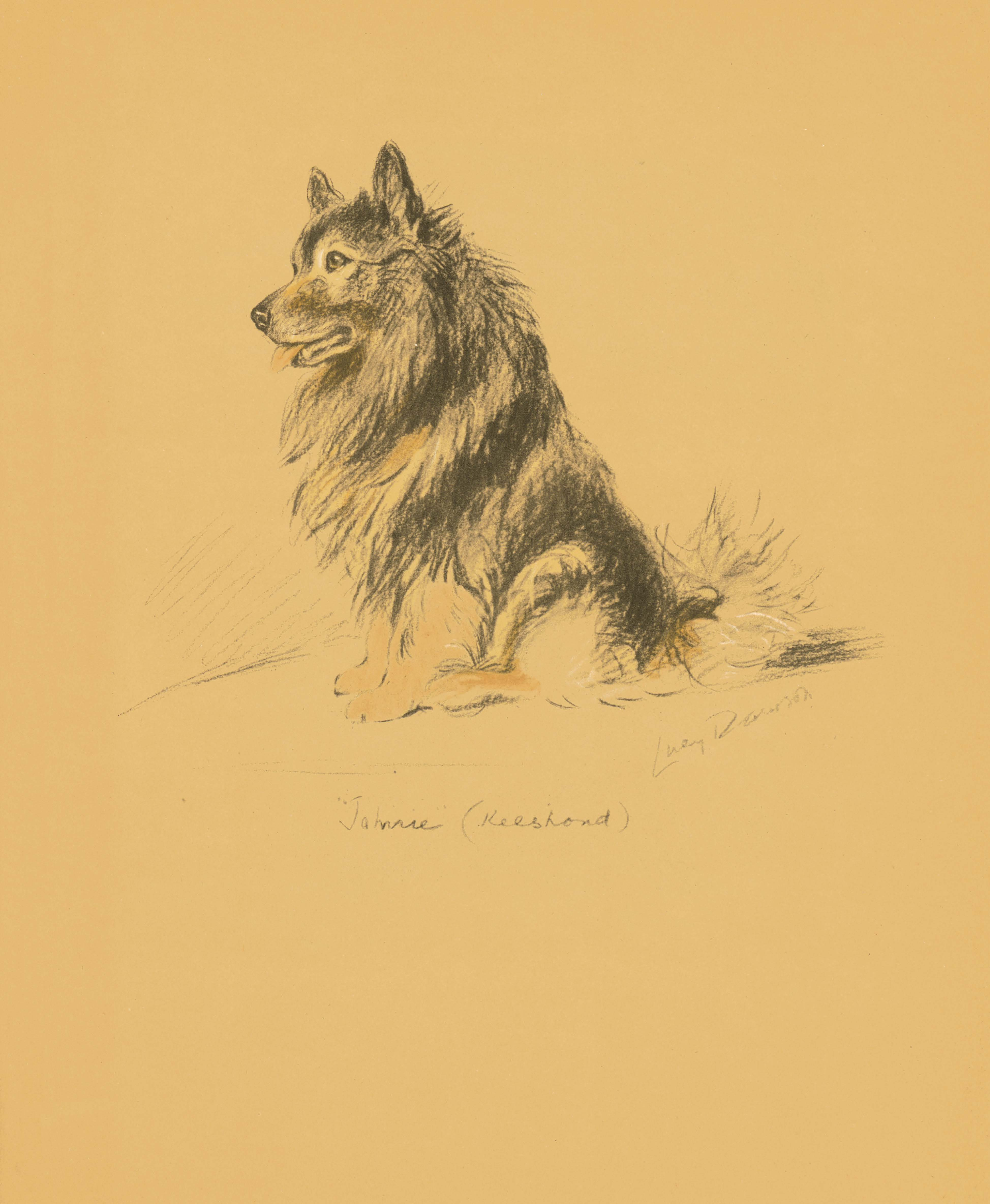 """Johnnie"" (Keeshond) (c) Lucy Dawson from Dogs Rough and Smooth"