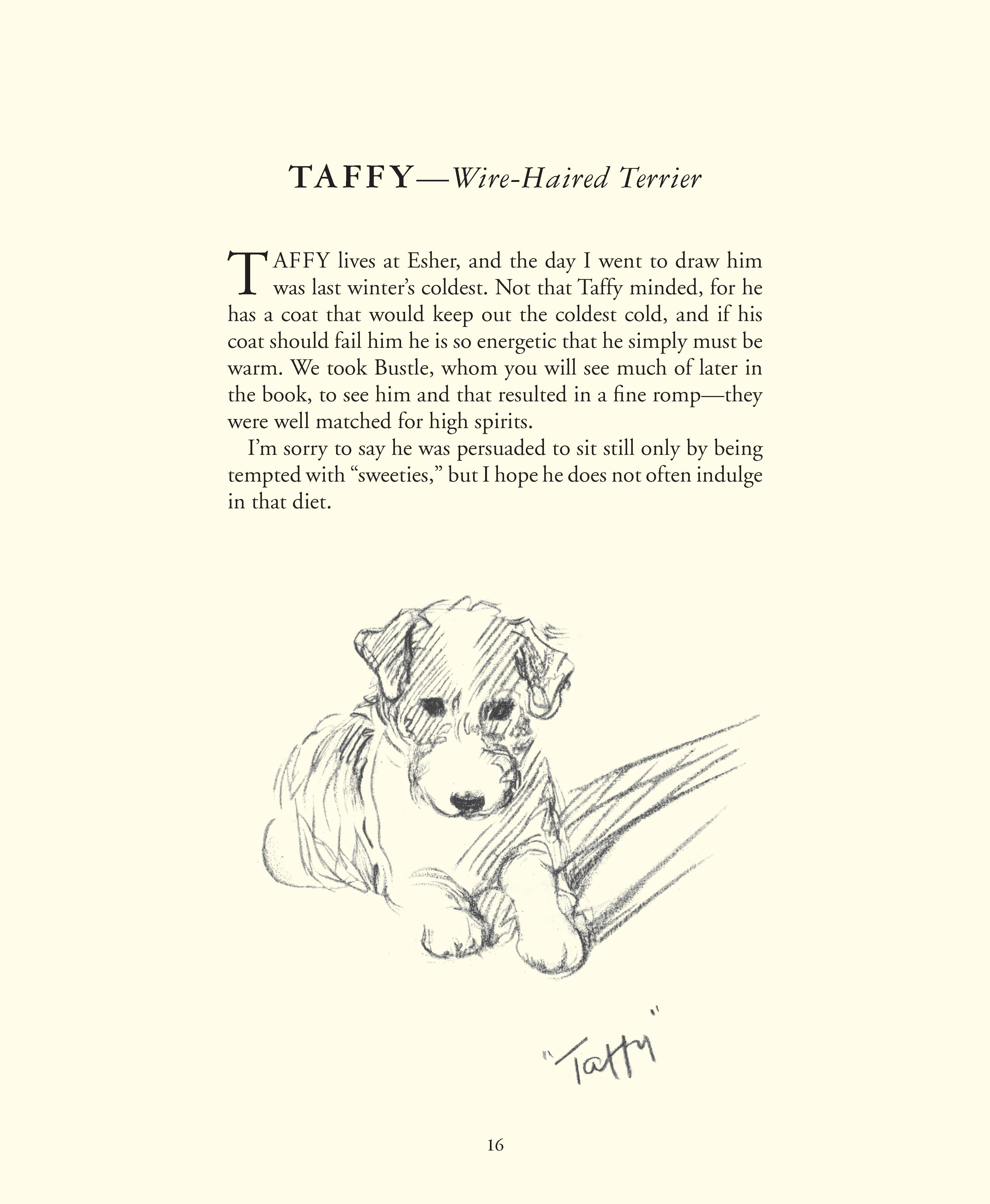 Taffy  Wire haired terrier Lucy Dawson