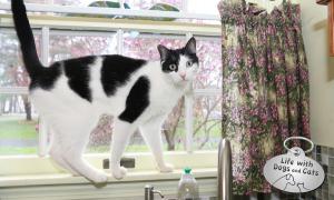 Haiku by Cat: Supervisor