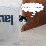 Cat House: Never Trust the Real Estate Listing
