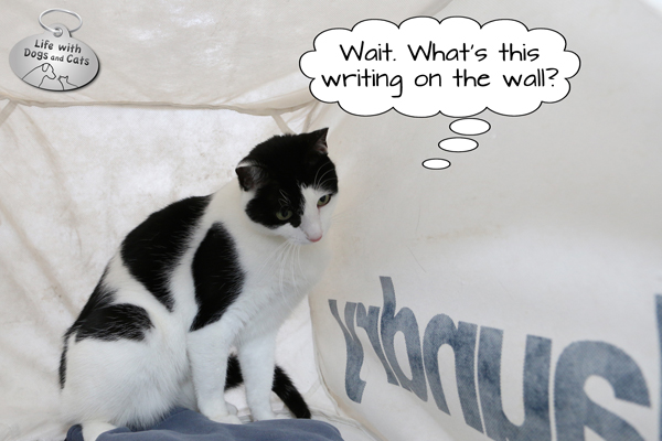 Elsa Clair ponders the writing on the wall in her new cat house