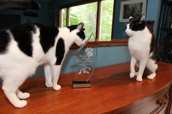 Two cats inspect the BlogPaws 2014 Nose to Nose Award