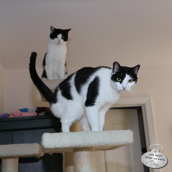 Elsa Clair has positioned herself so Calvin has to go past her to get down.