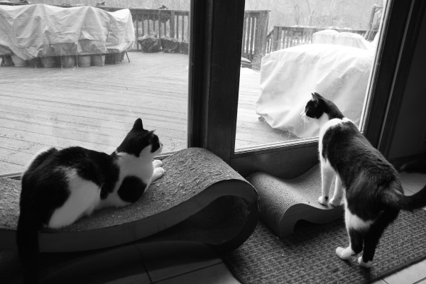 Deck watch: Elsa Clair and Calvin on the lookout for critters