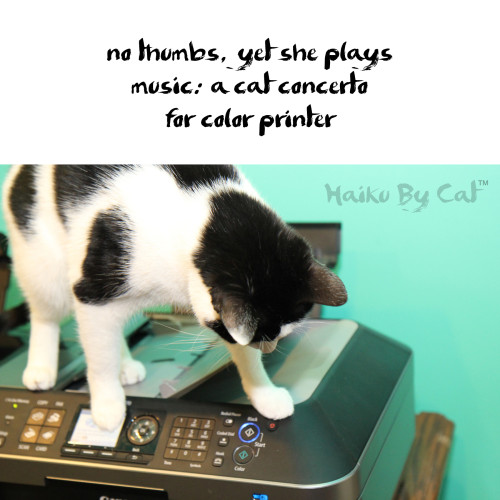 Haiku by cat: no thumbs, yet she plays / music: a cat concerto / for color printer