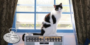 Haiku by Cat: Chill