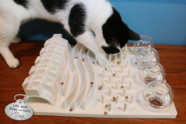 Elsa Clair has to work for her food, but she doesn't mind. And food puzzles are great ways to stimulate a cat's inner hunter.