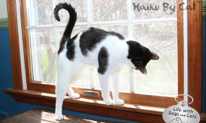 Haiku by Cat: Chipmunk