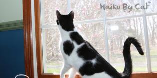 Haiku by Cat: Neighbors