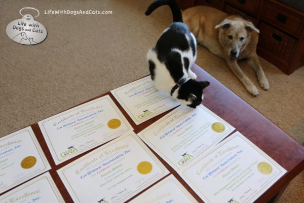 Elsa Clair inspects my Cat Writers' Association Certificates of Excellence. Jasper seems somewhat less than impressed.