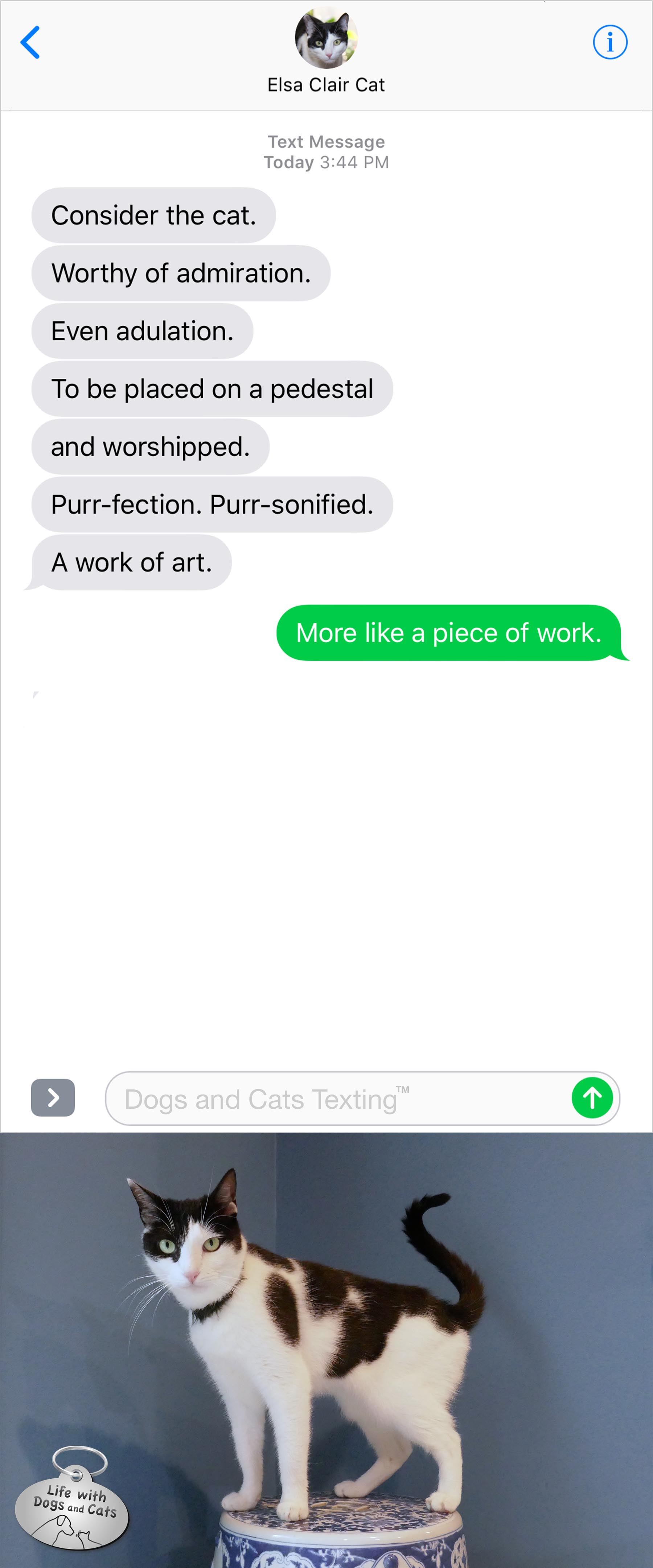 #TextFromCat Consider the cat. Worth of admiration. A work of art. Me: More like a piece of work.