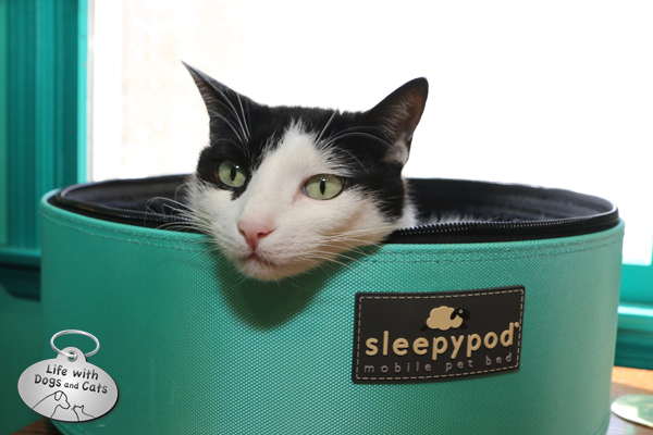 Happy Elsa Clair kitty in her Sleepypod.