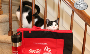 #ThatsGold: Elsa Clair Wins Big With Her Purr-formance