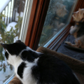 Elsa Clair and Tucker watch wildlife eating the food I put out for the birds after the blizzard.