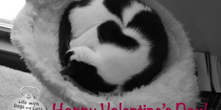 Photo: Happy Valentine's Day!