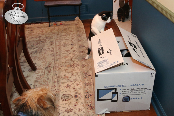 Tucker and Calvin think there are more than boots inside the box.