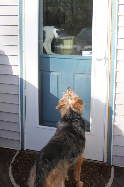 Dog waiting by door, with cat looking down