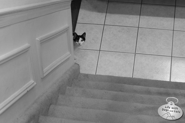 Elsa Clair awaits at the bottom of the stairs