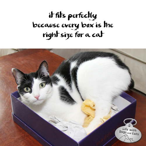 Haiku by Cat: it fits perfectly / because every box is the / right size for a cat