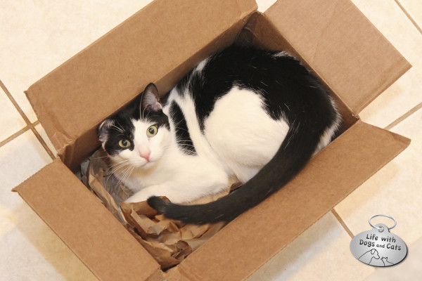 Reasons cats love boxes: They fit perfectly, every time.
