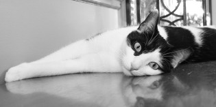 Photo: Reflections on being a cat