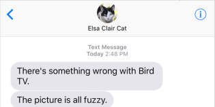 Text from Cat: Snow kidding