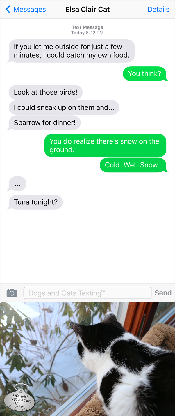 Text from Cat: I could catch my own food. Me: There's cold wet snow on the ground. Cat: Tuna tonight?
