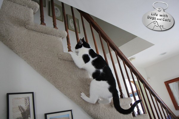 World Cat Day: cat has her own way of climbing stairs