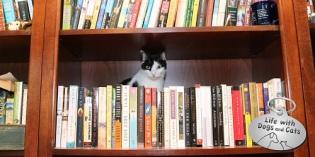 Haiku by Cat: Sideways