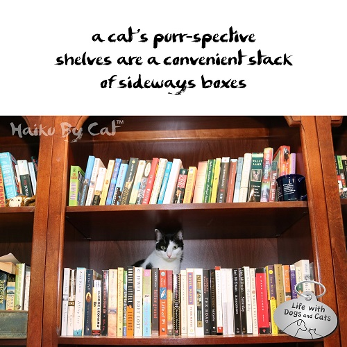 Haiku by Cat: a cat's purr-spective / shelves are a convenient stack / of sideways boxes