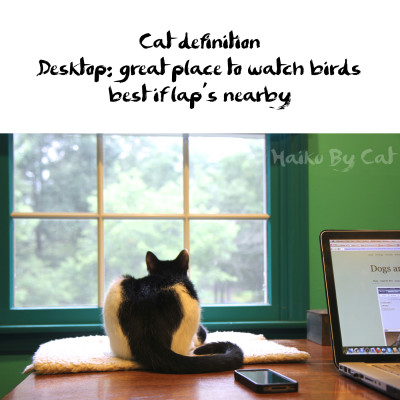 Haiku by Cat: Cat definition / Desktop: great place to watch birds / best if lap's nearby