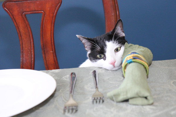 All I want is a seat at the table...and maybe a little tuna.
