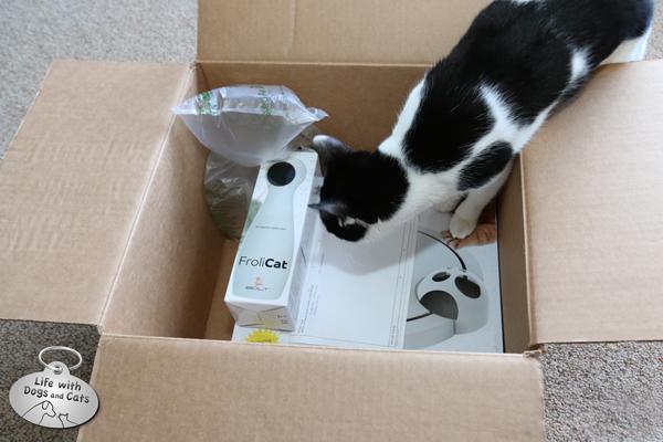 Elsa Clair xplores box with electronic cat toys