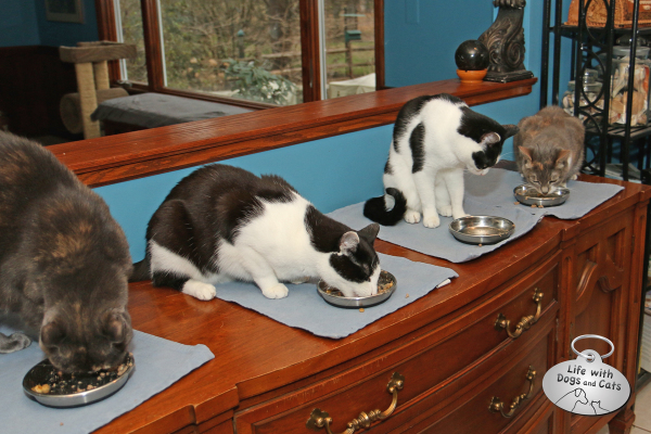 Athena, Calvin, Elsa Clair and Dawn eat dinner.