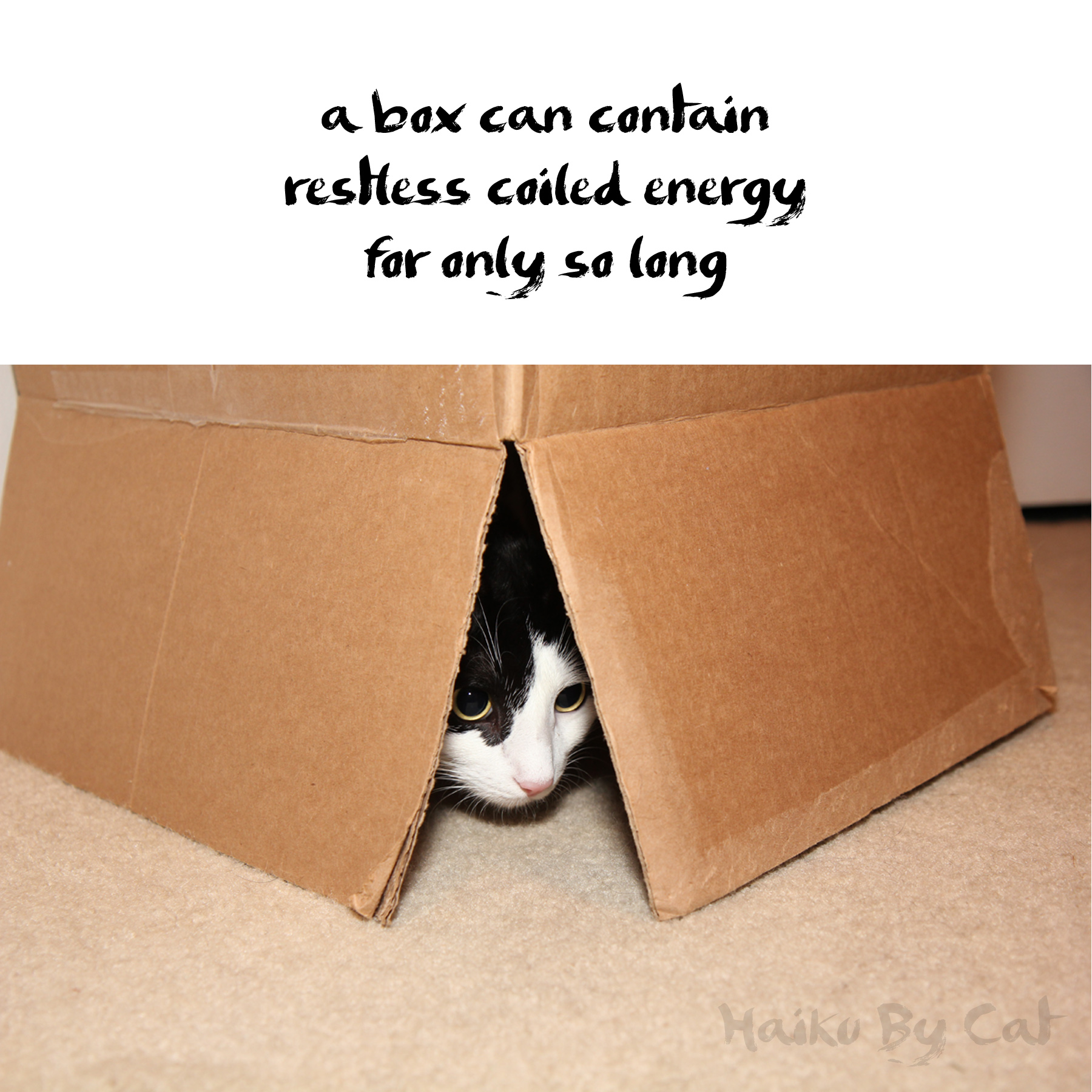 Haiku by Cat: a box can contain / restless coiled energy / for only so long