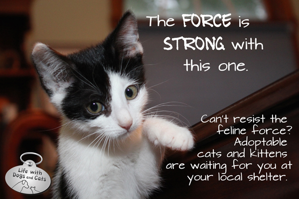 Star Wars Elsa Clair cat force is strong
