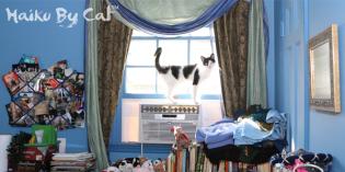Haiku by Cat: Never