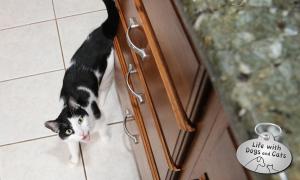 Haiku by Cat: Counterintuitive