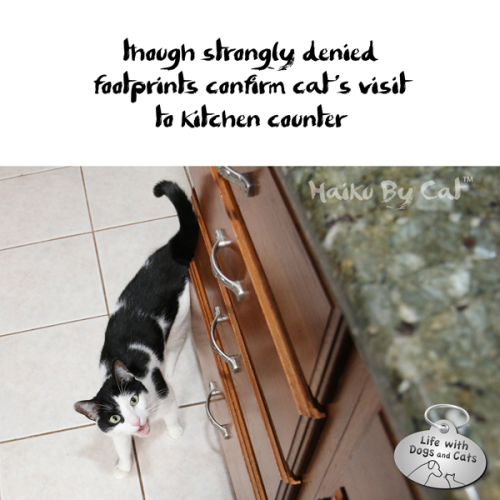 Haiku by Cat: though strongly denied / footprints confirm cat's visit / to kitchen counter