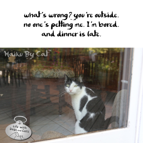 Haiku by Cat: what's wrong? you're outside. / no one's petting me. I'm bored. / and dinner is late.