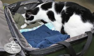 Haiku by Cat: Packing