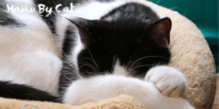 Haiku by Cat: Sometimes