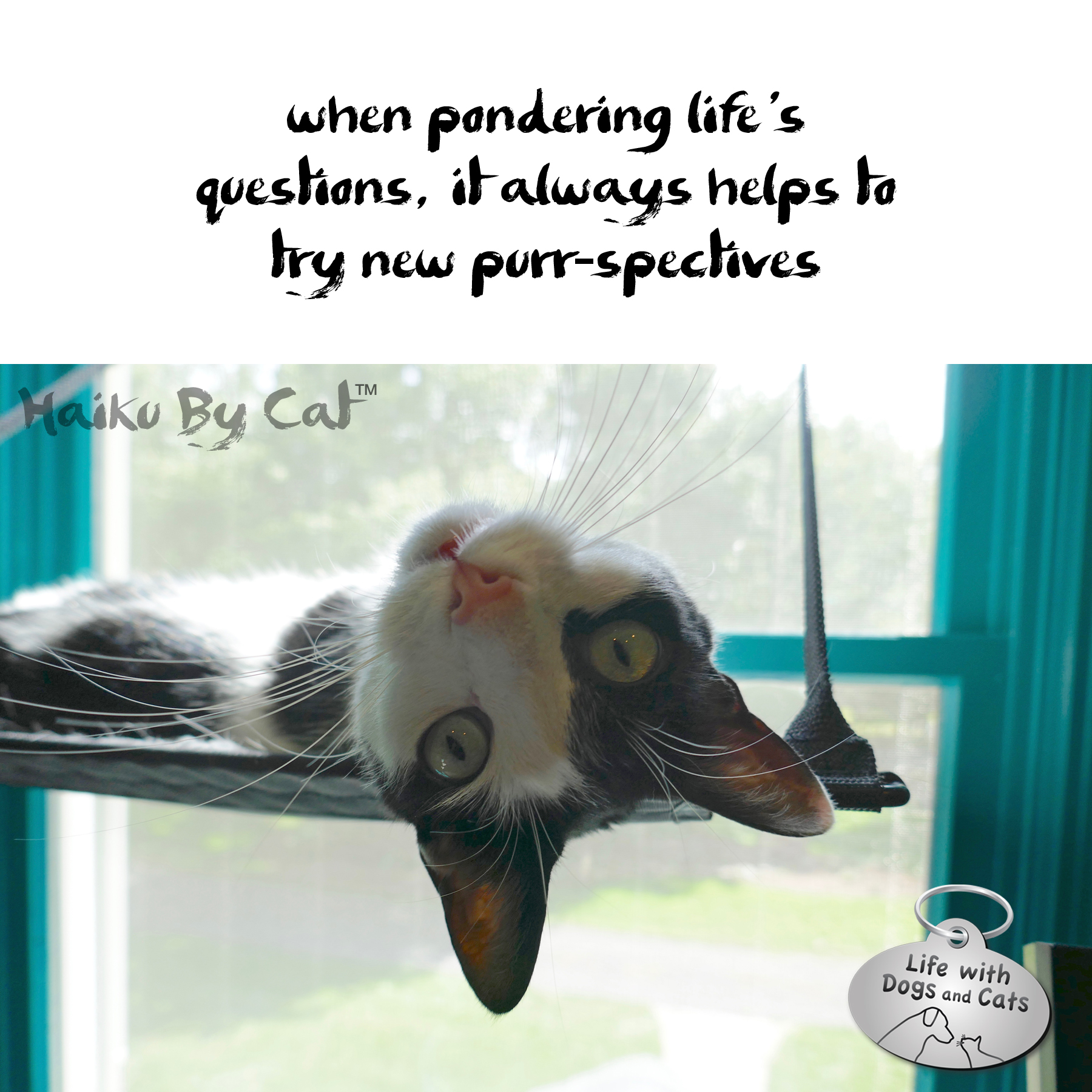 #HaikuByCat when pondering life's / questions, it always helps to / try new purr-spectives