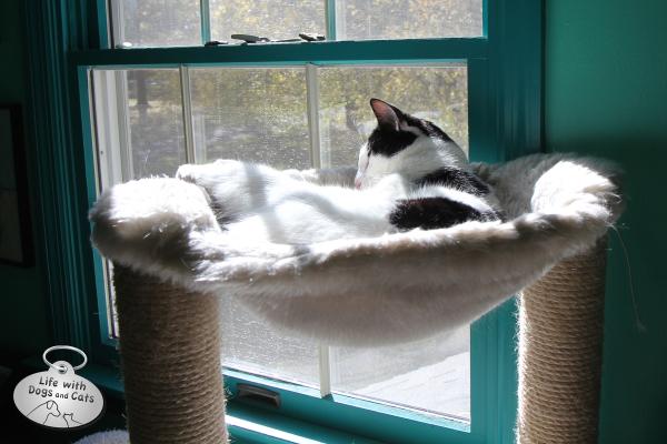 Elsa Clair enjoys the sun on her hammock.