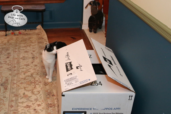 Calvin from Life with Dogs and Cats ponders what's inside the box