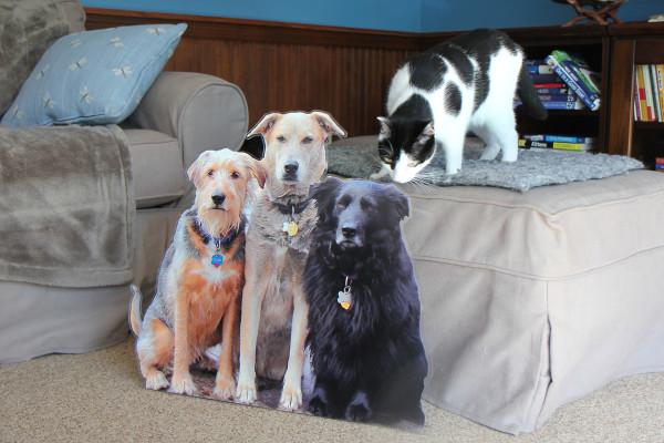 Elsa Clair investigates the flat pets