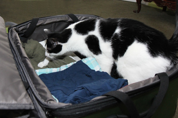 Elsa Clair the cat helps pack