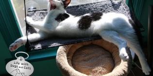 Haiku by Cat: Liquids