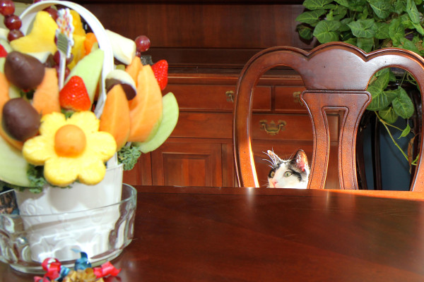 Cat looking at fruit arrangement