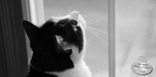 Photo: Cat at work
